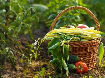 Jak rozpoznać naturalne warzywa